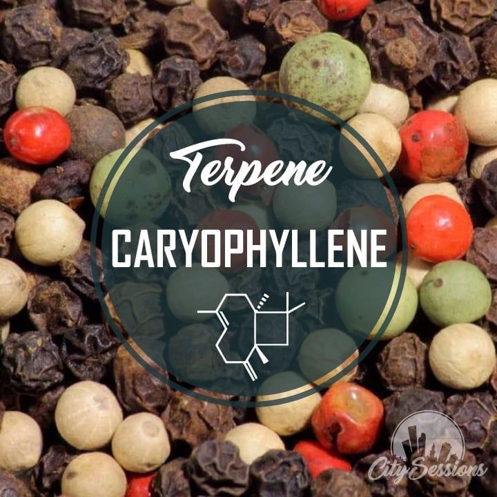 TerpCARYOPHYLLENE