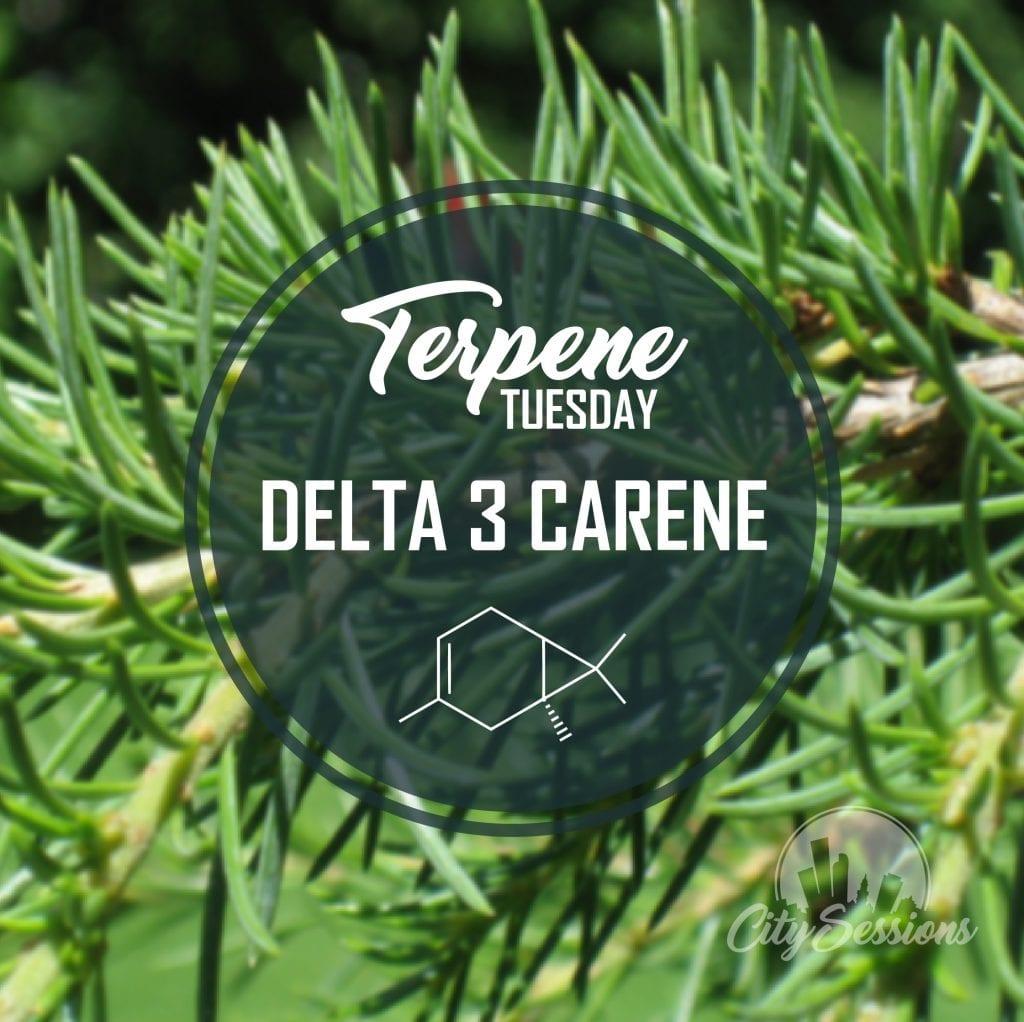Terpene Tuesday Delta 3 Carene