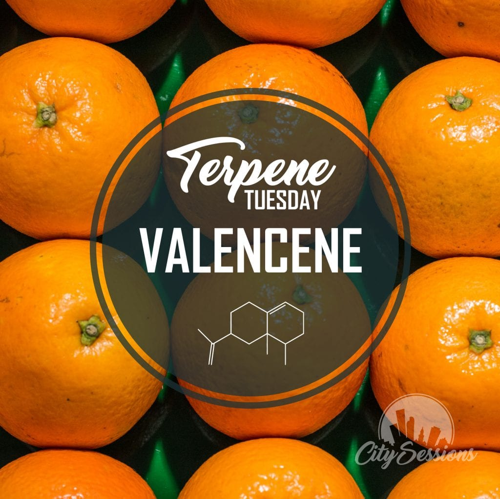 TerpeneTuesdayValencene 01 1024x1022