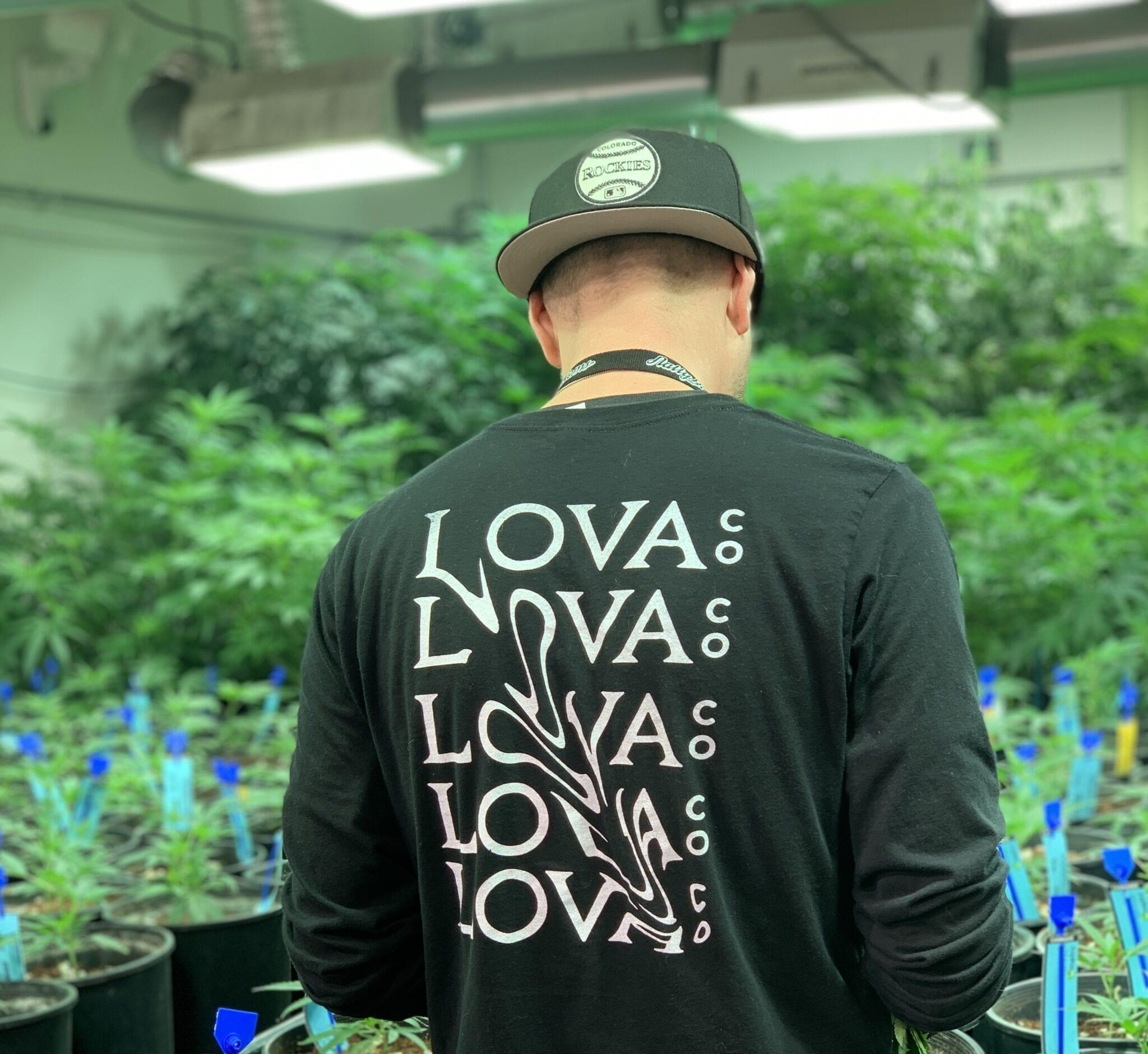Cannabis Tours In Denver